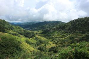Filipijnen rijstvelden